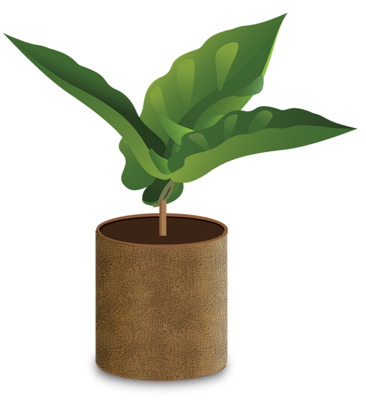 Plants clipart coffee tree. How grows a seedling
