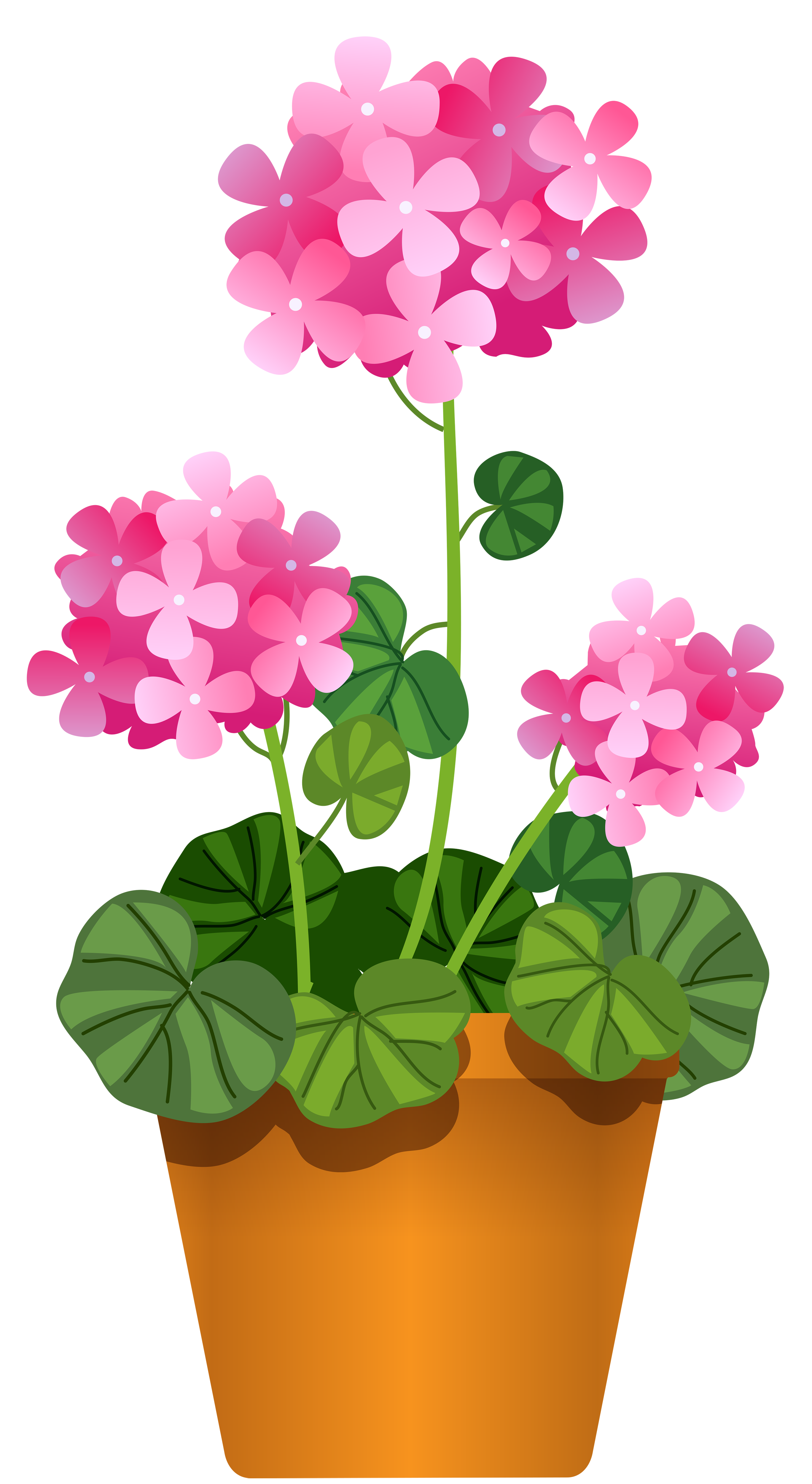 Pin by denia patricia. Growth clipart flower bud