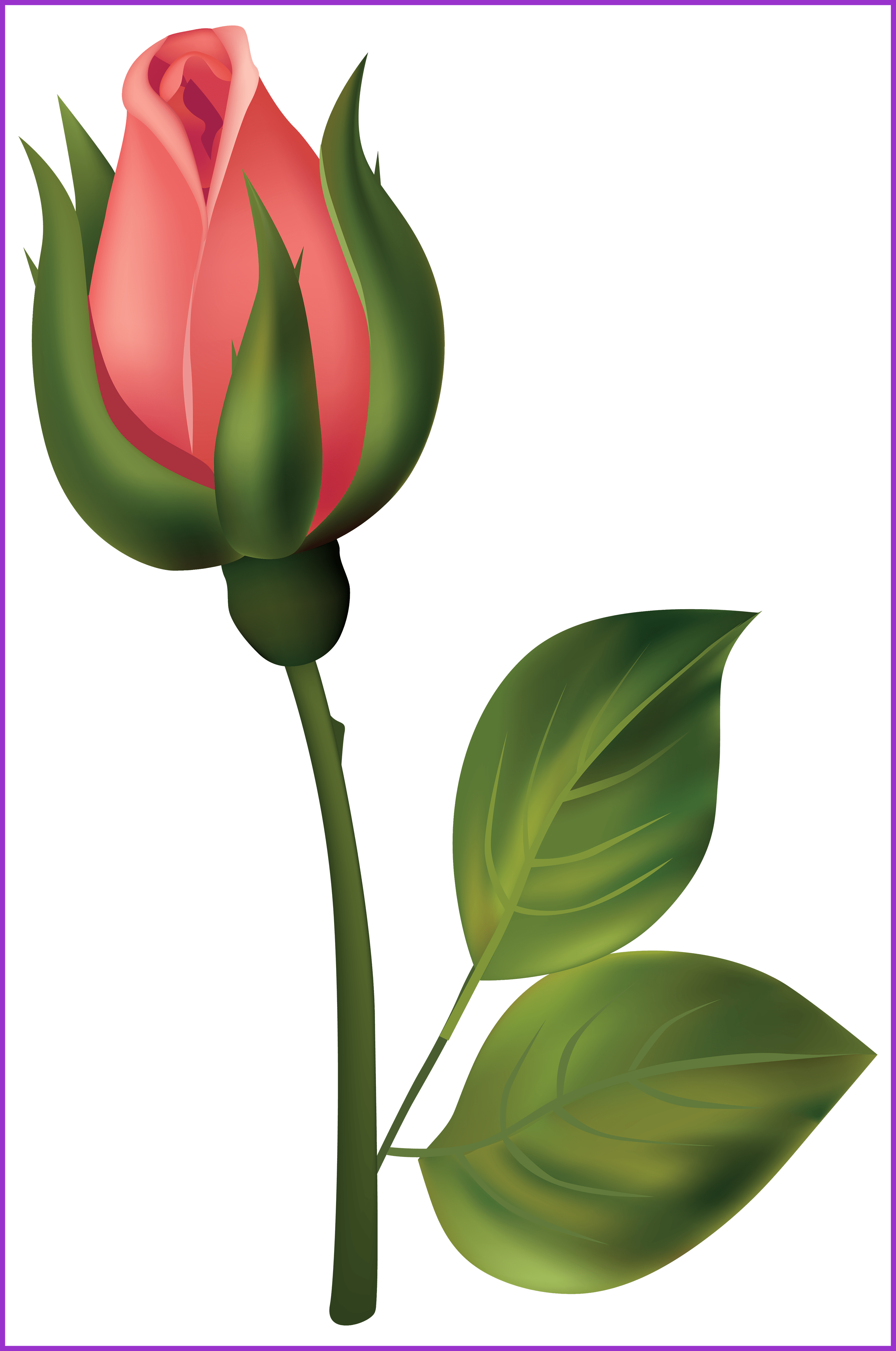 Best pink and yellow. Growth clipart flower bud