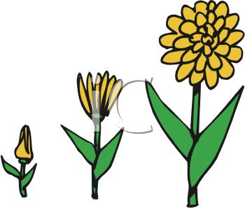 Growing plant free download. Growth clipart flower bud