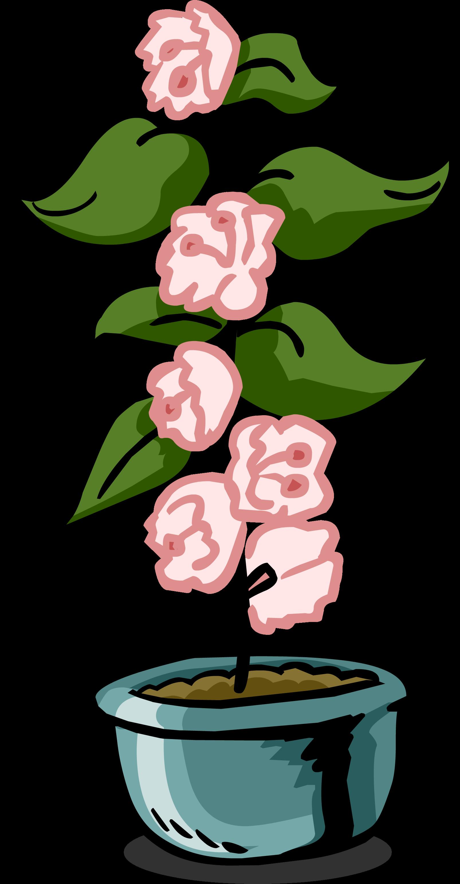 Plants clipart house plant. Growing club penguin wiki