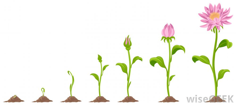 Seedling clipart flower growth. Free growing cliparts download