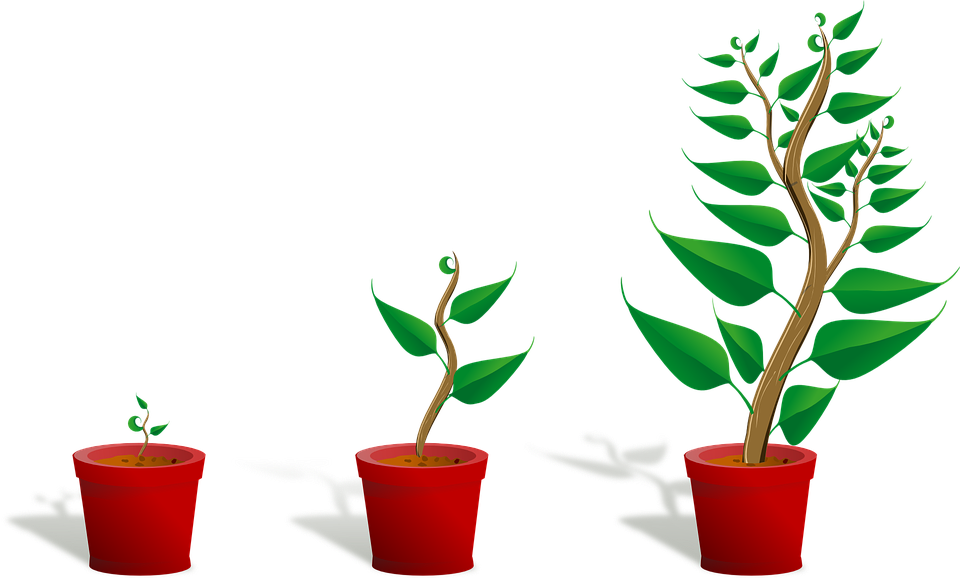 Outside clipart plant. Difference between growth and