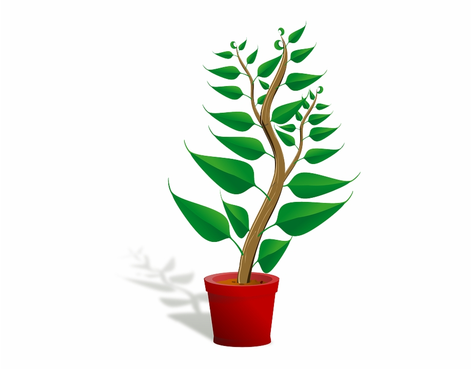 Growth clipart potted plant. Seedling sapling growing