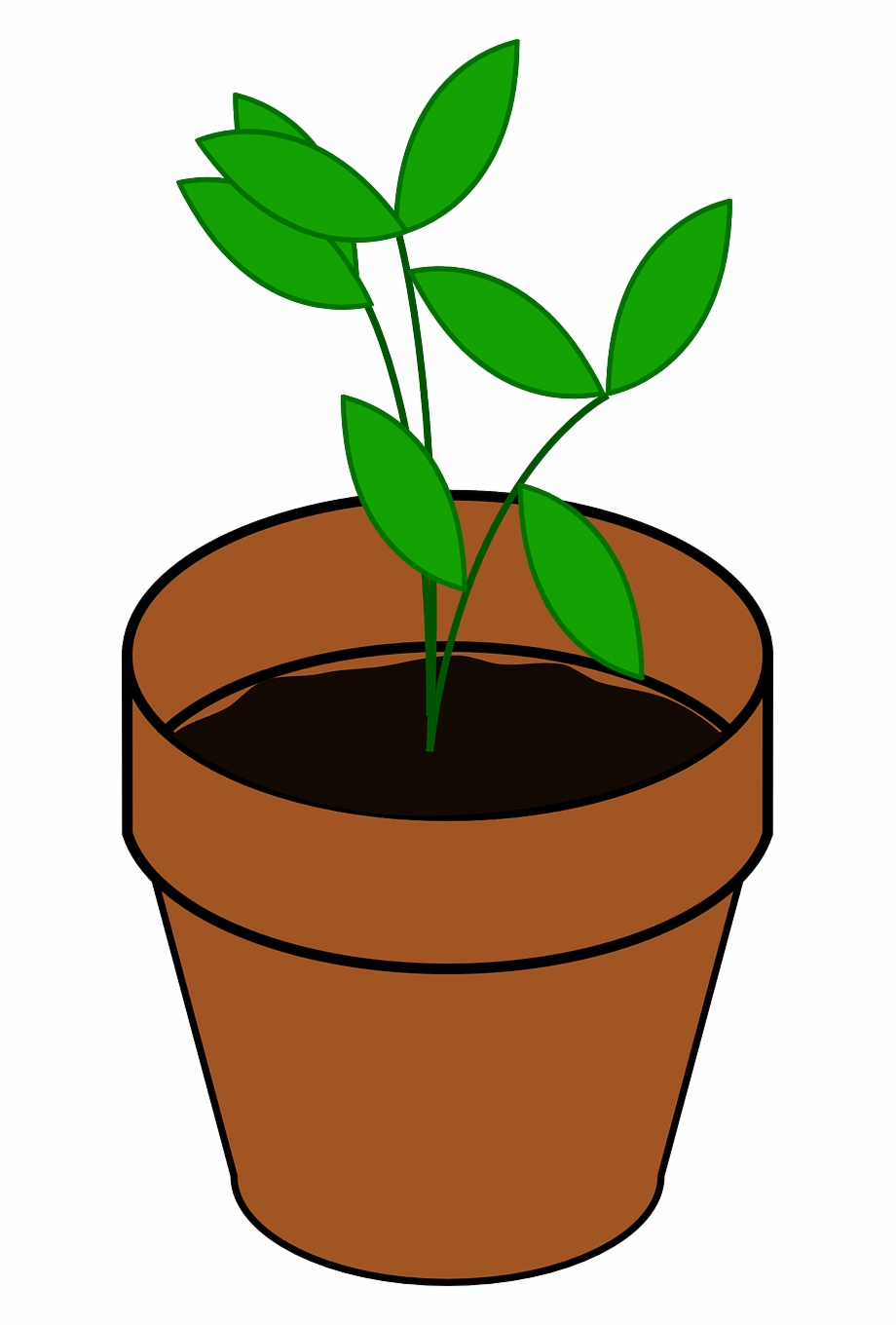 Sapling pot brown png. Growth clipart potted plant