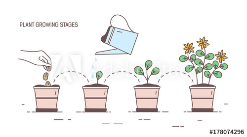 Growth clipart potted plant. Growing stages of seeding