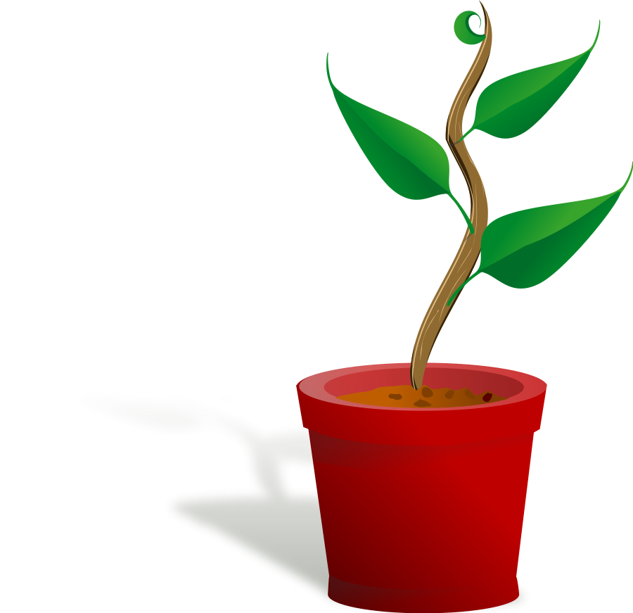 collection of growing. Growth clipart potted plant
