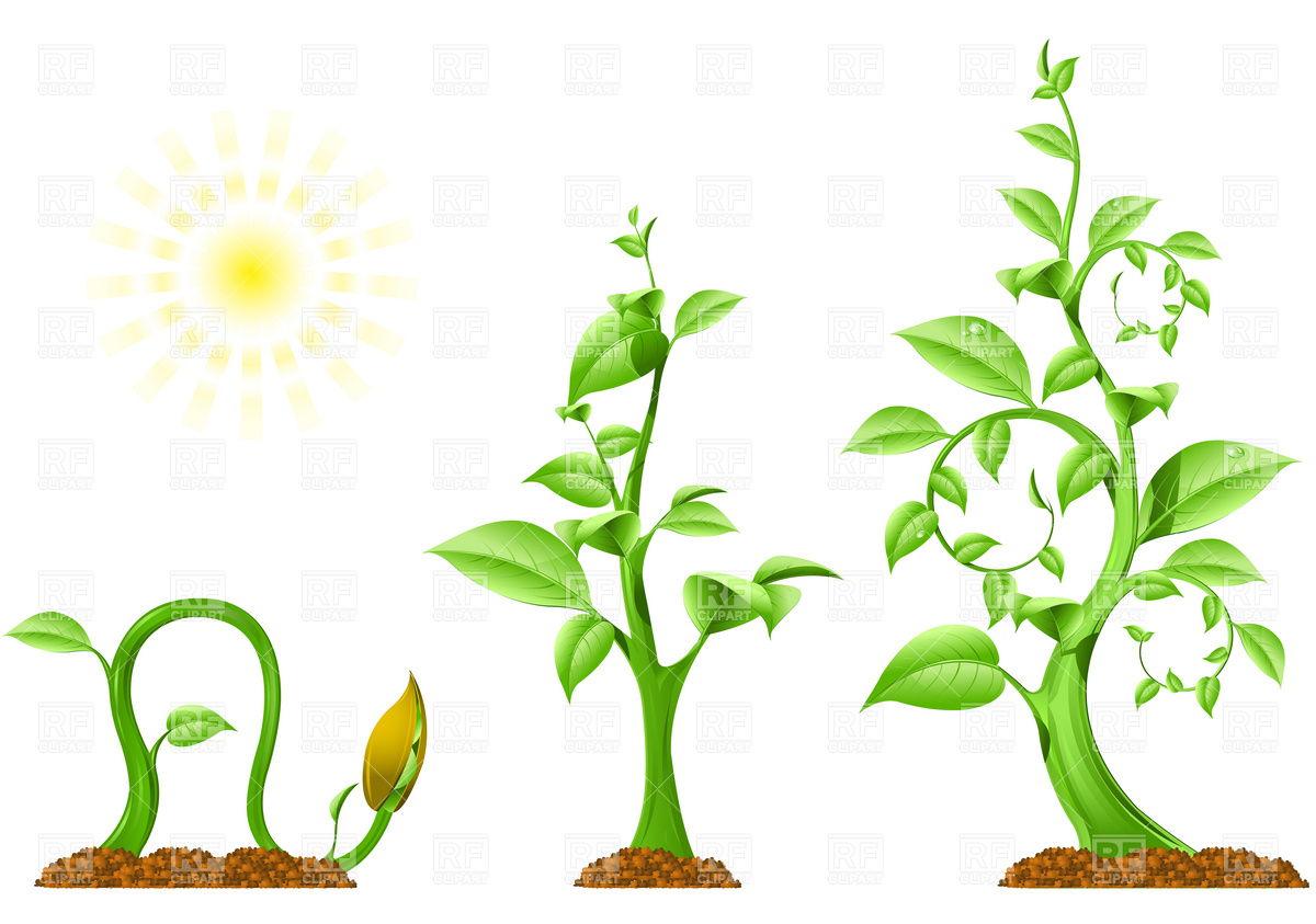 Planting clipart vector. Flower growing free download