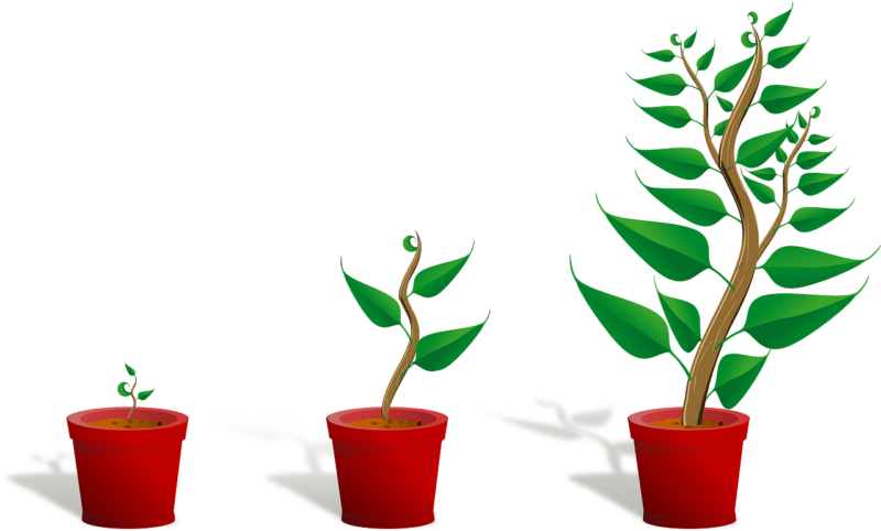 growth clipart strong tree