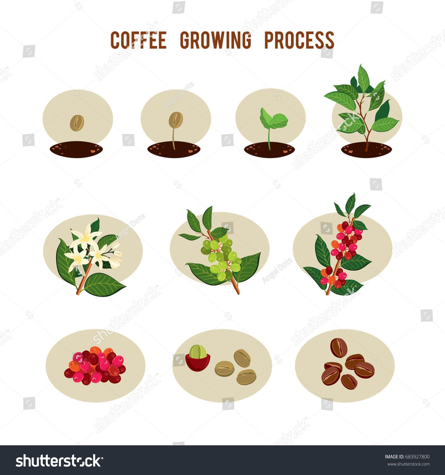 Growth clipart tree sprout. Plant seed germination stages