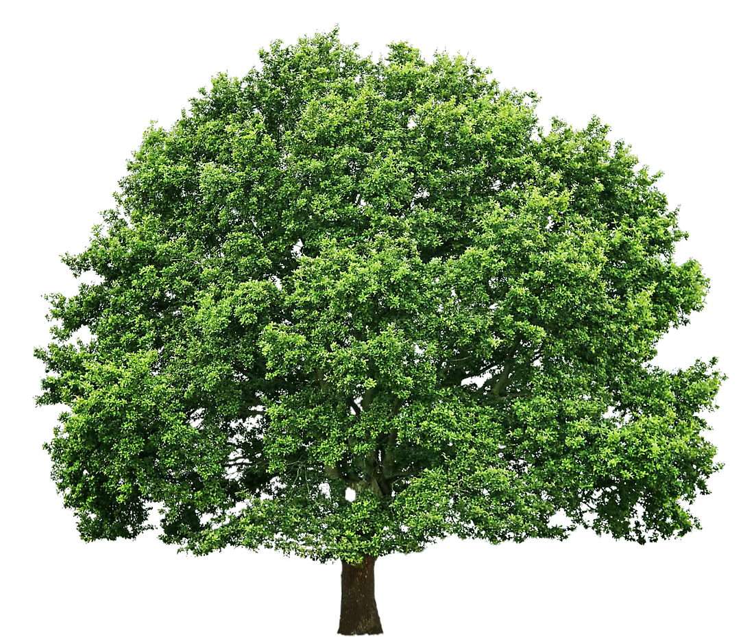 Oak big art cards. Growth clipart tree sprout