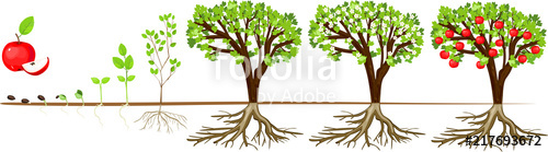 Life cycle of apple. Growth clipart tree sprout