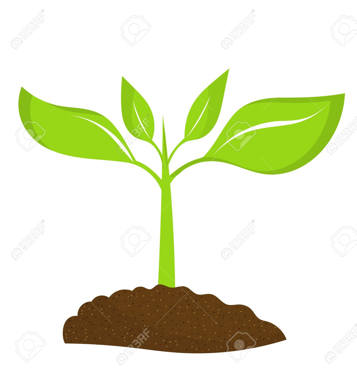 Seedling clipart land plant. Free download best on