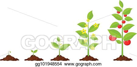 Vector art of plant. Growth clipart tree sprout
