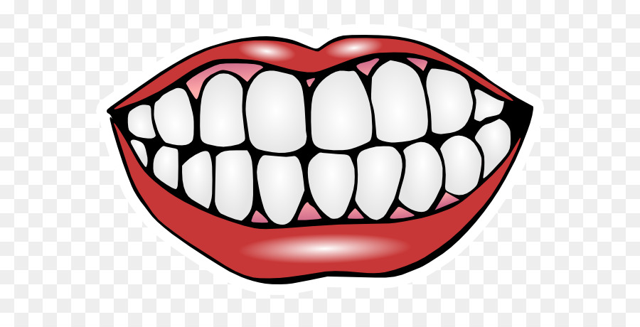 Gum clipart human tooth. Smile clip art front