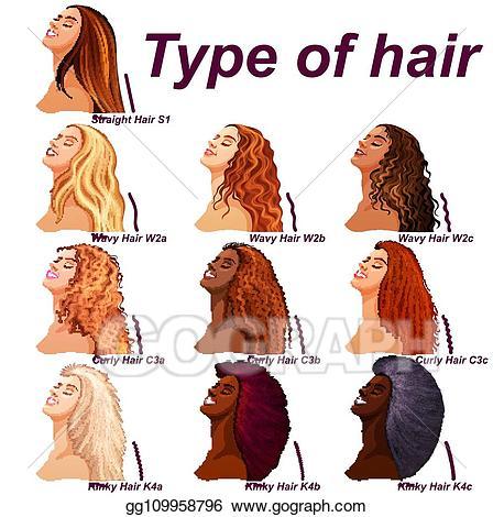 Hair clipart different hair. Vector art types chart