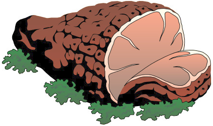 Ham clipart. Baked