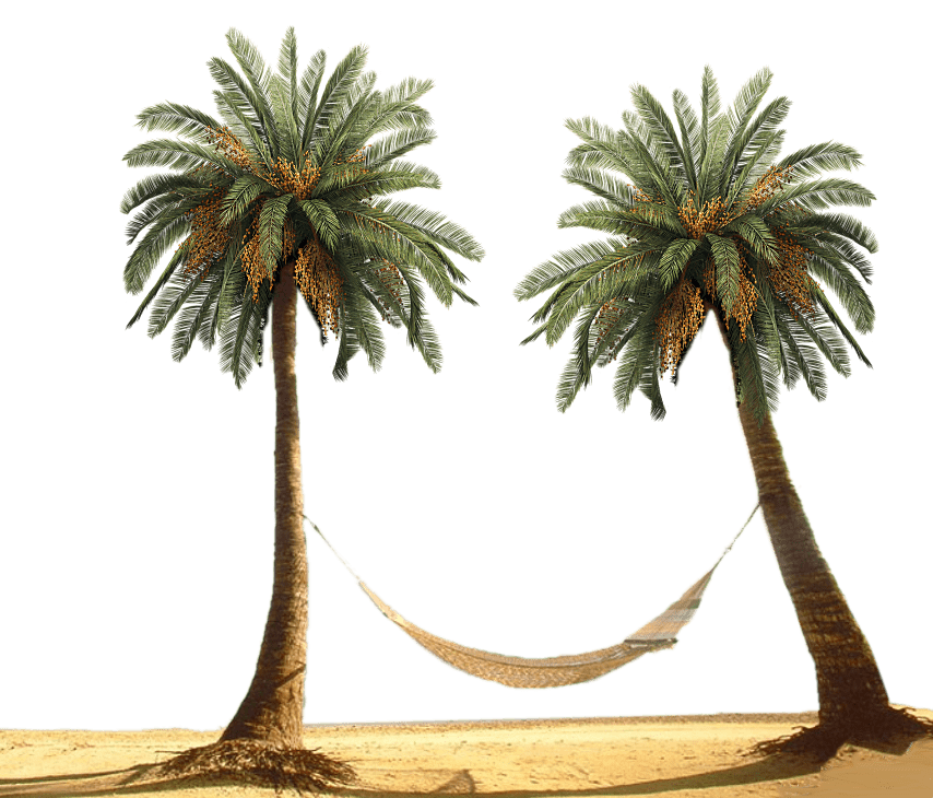 Between trees transparent png. Palm clipart hammock