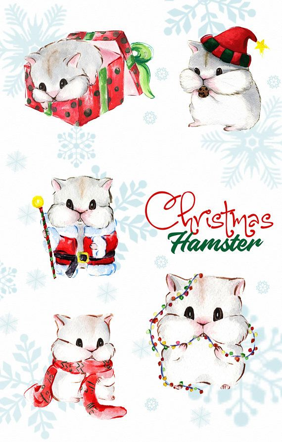 Illustrations watercolor clip art. Hamster clipart christmas