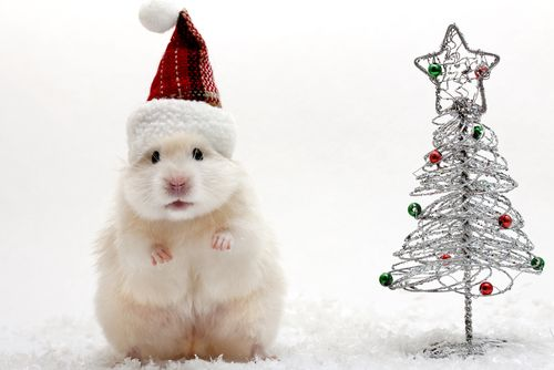 Hamster clipart christmas. Cute in a hat