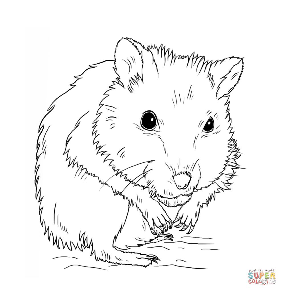 Hamster clipart colour. Dwarf coloring page free