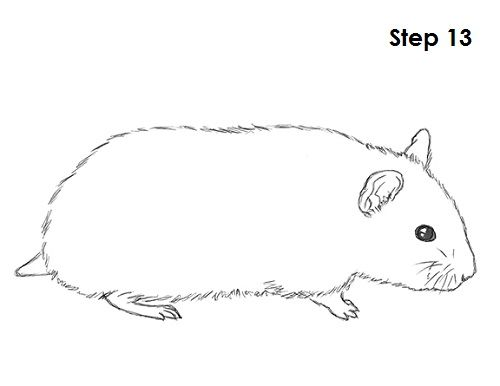 Drawing in drawings animal. Hamster clipart drawn