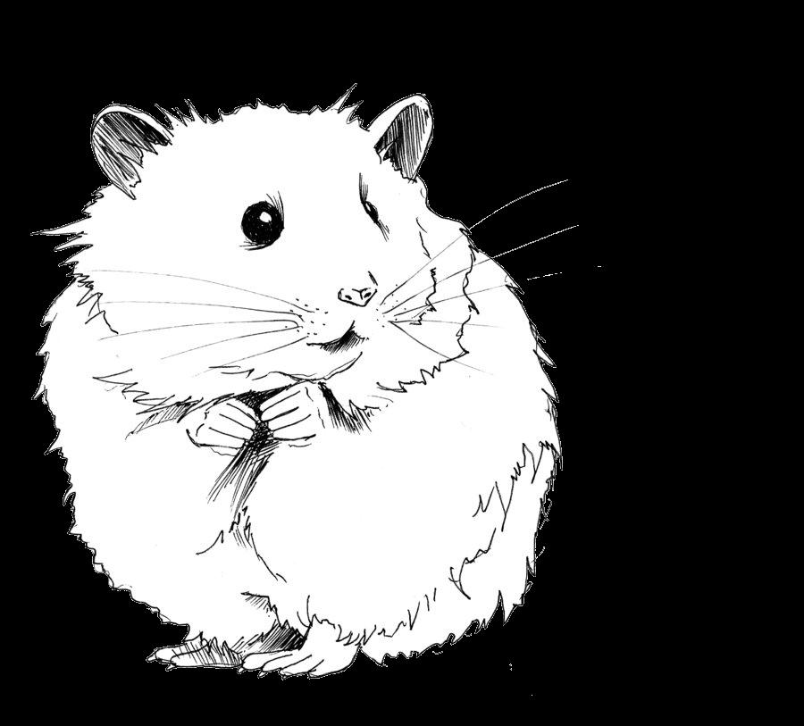 Jerbo dibujo h mster. Hamster clipart gerbil