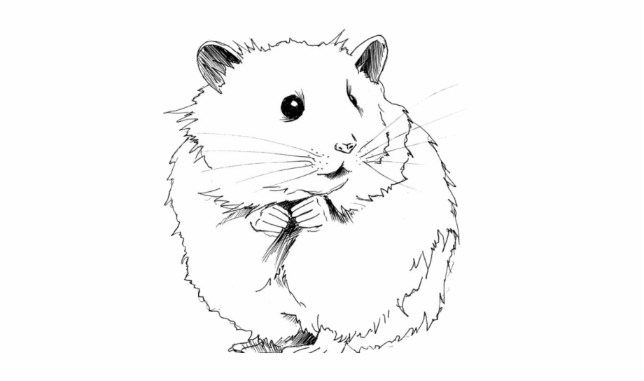 Hamster clipart gerbil. Drawn black and white