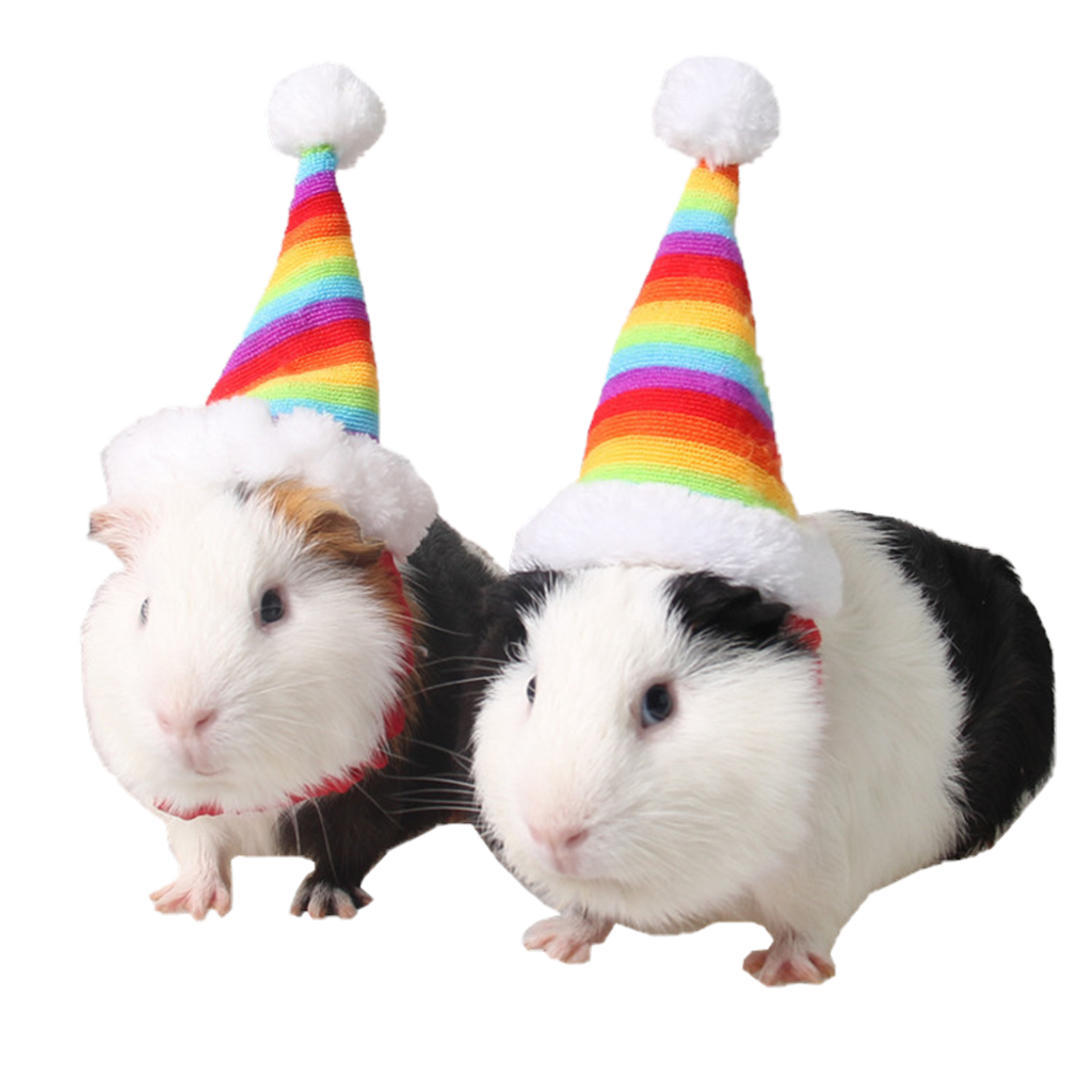 Cute hamsters hats guineapig. Hamster clipart guinea pig