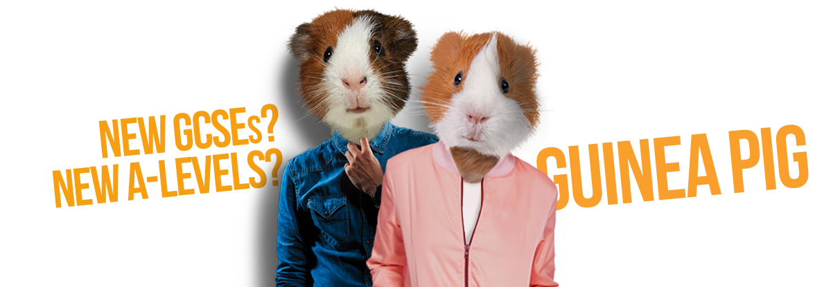 Hamster clipart guinea pig. Go team new driving
