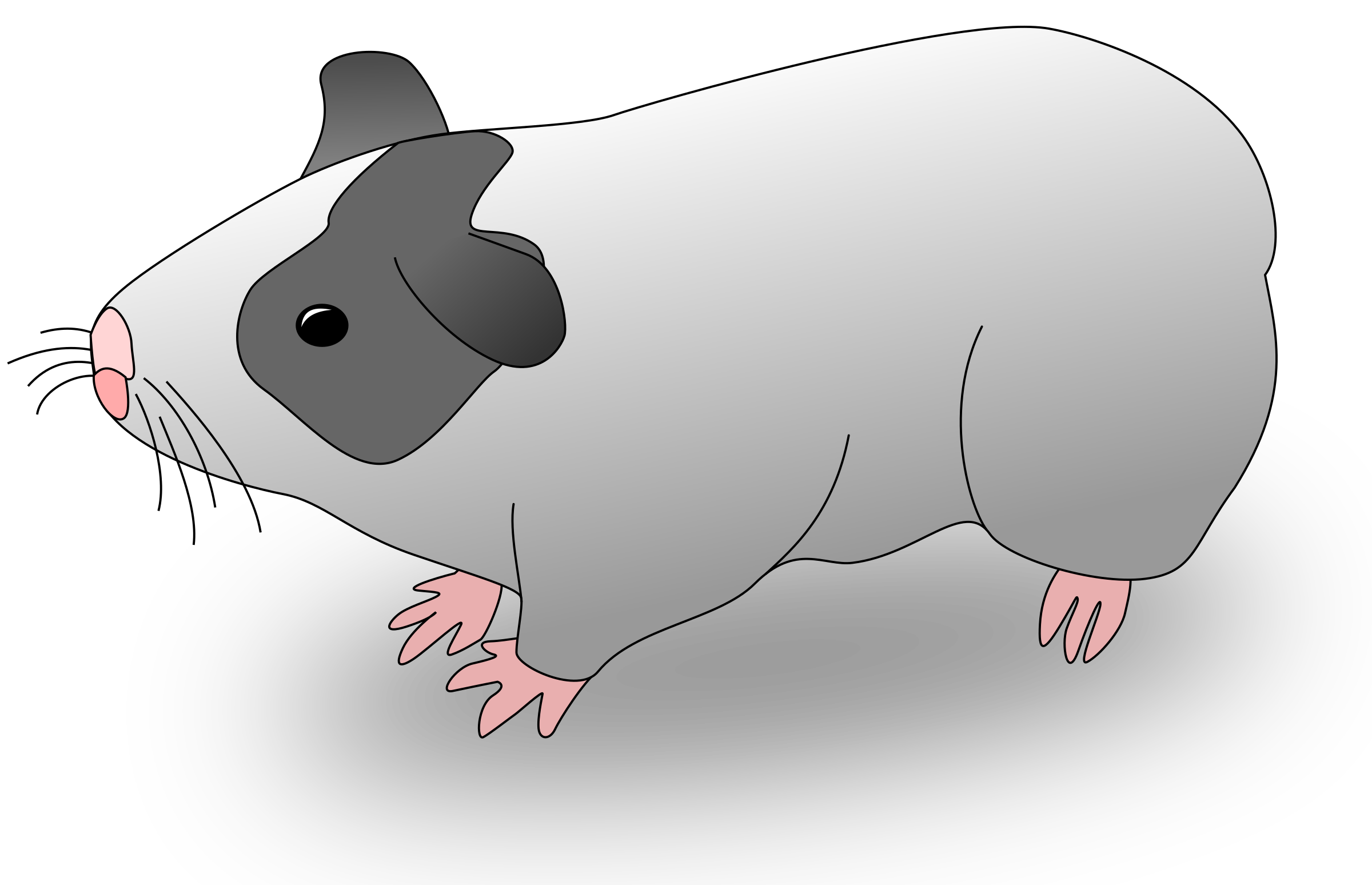 Cavia big image png. Hamster clipart guinea pig