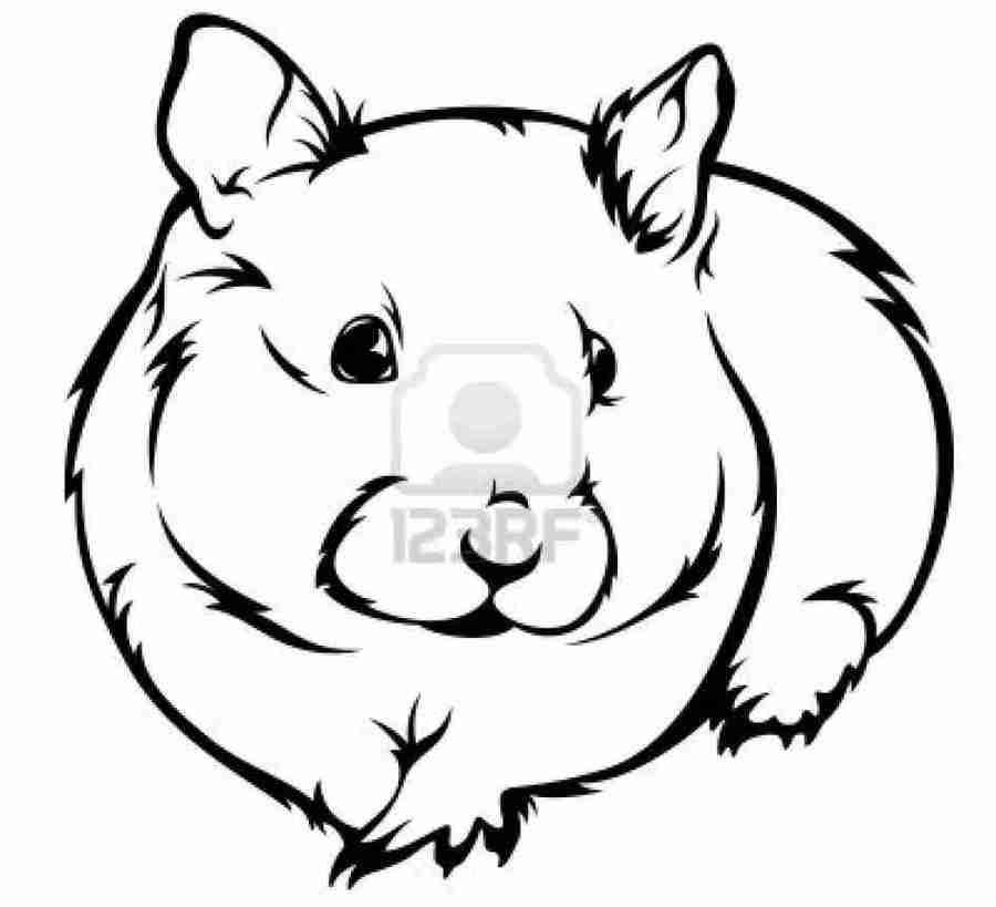 Drawing pet white black. Hamster clipart hamster head