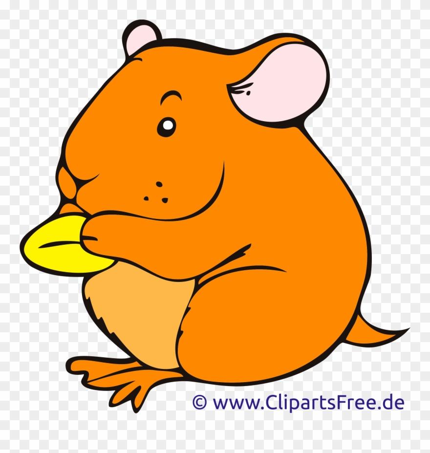 Hamster clipart orange. Cartoon clip art png