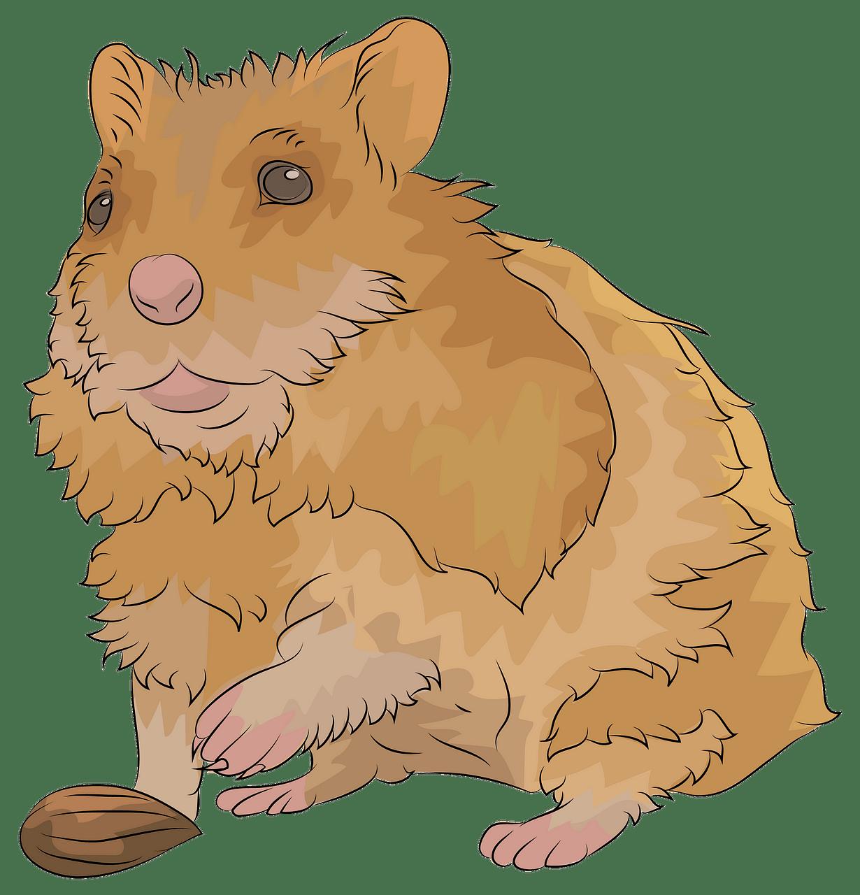 Hamster clipart orange. Free download creazilla
