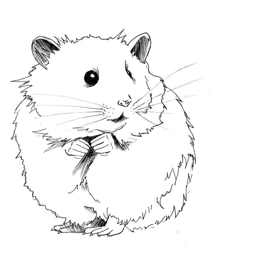Black and white clip. Hamster clipart outline