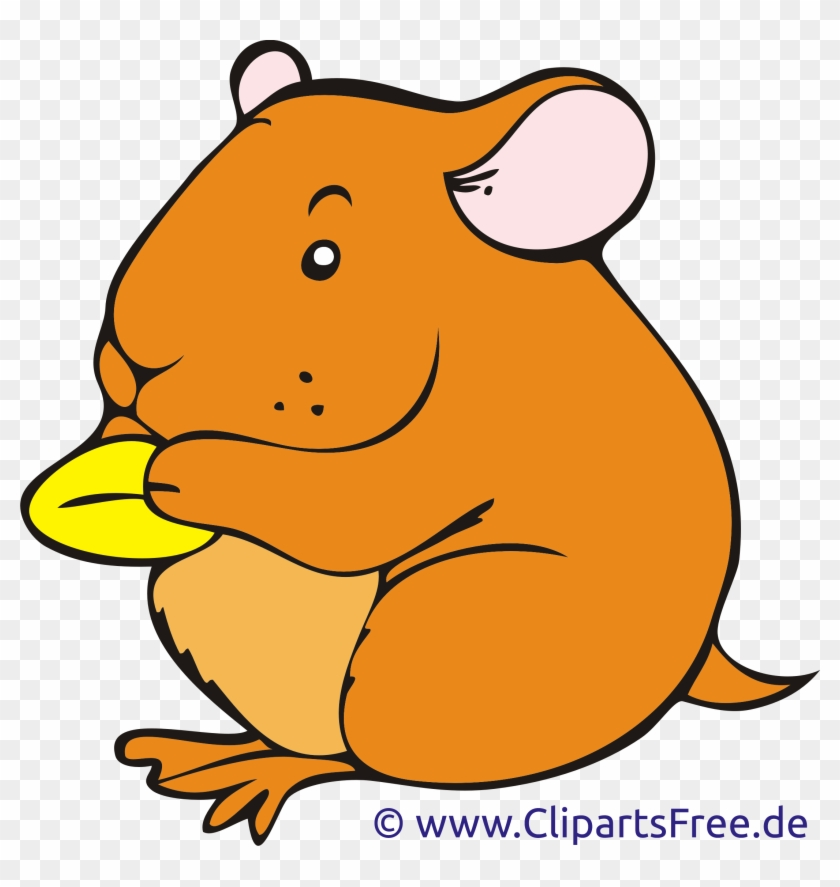 Hamster clipart printable. Free download clip art