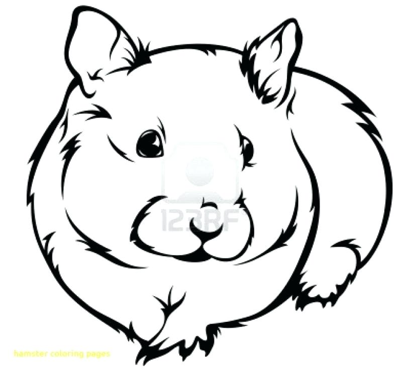 Free download clip art. Hamster clipart printable