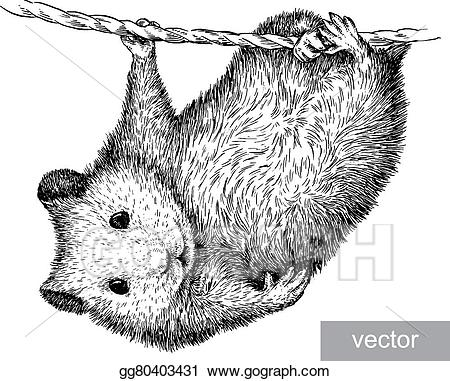 Vector illustration engrave eps. Hamster clipart realistic