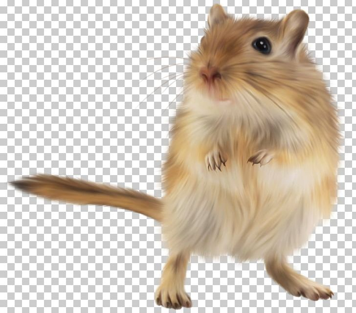 Gerbil golden mouse png. Hamster clipart rodent
