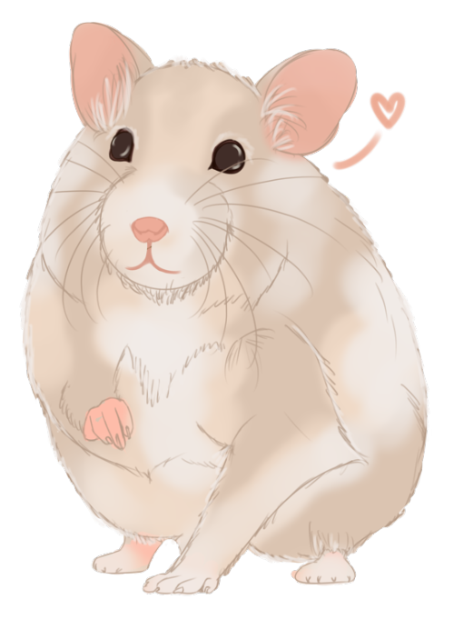 Hamster clipart syrian hamster. My is so cute