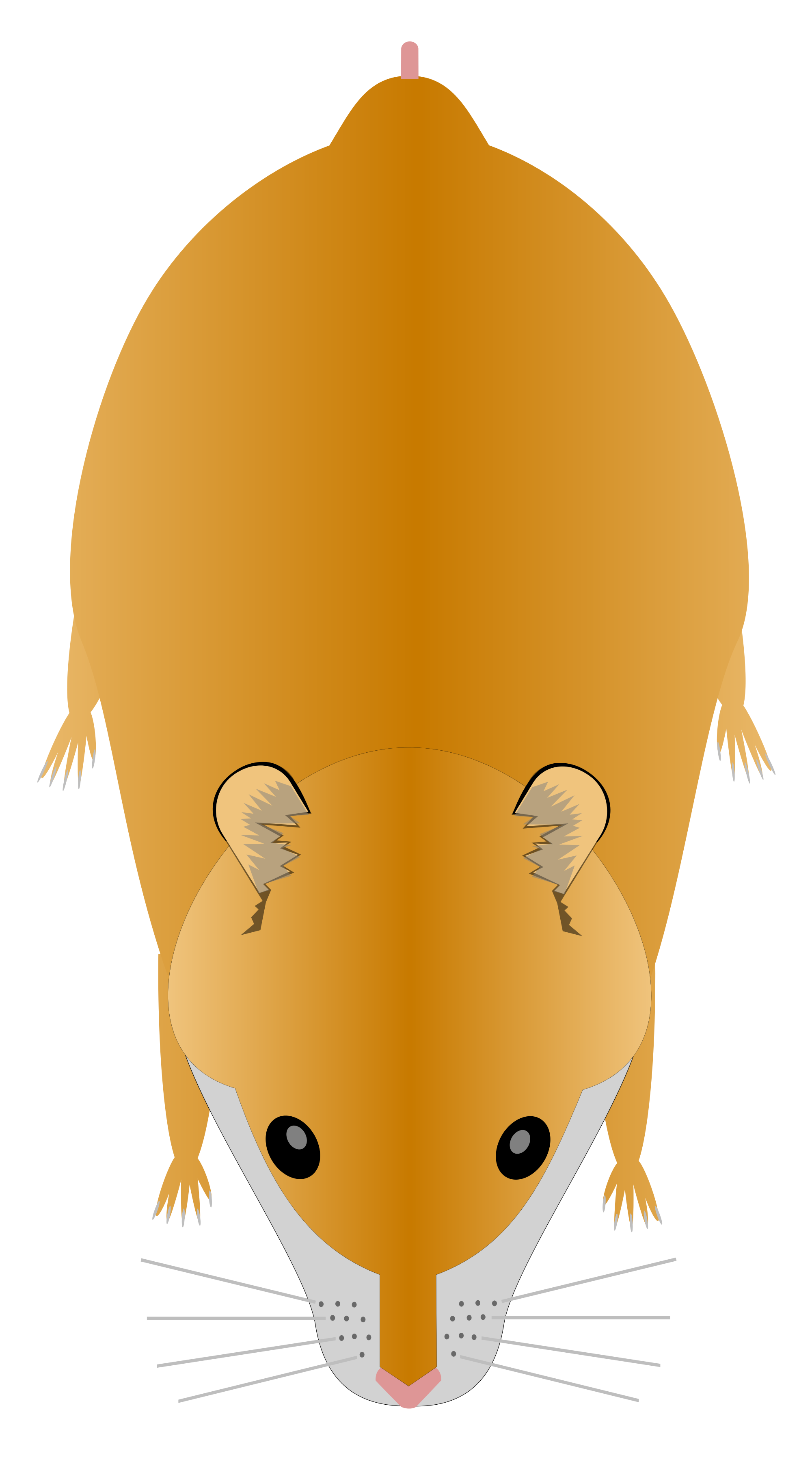 File svg wikimedia commons. Hamster clipart syrian hamster