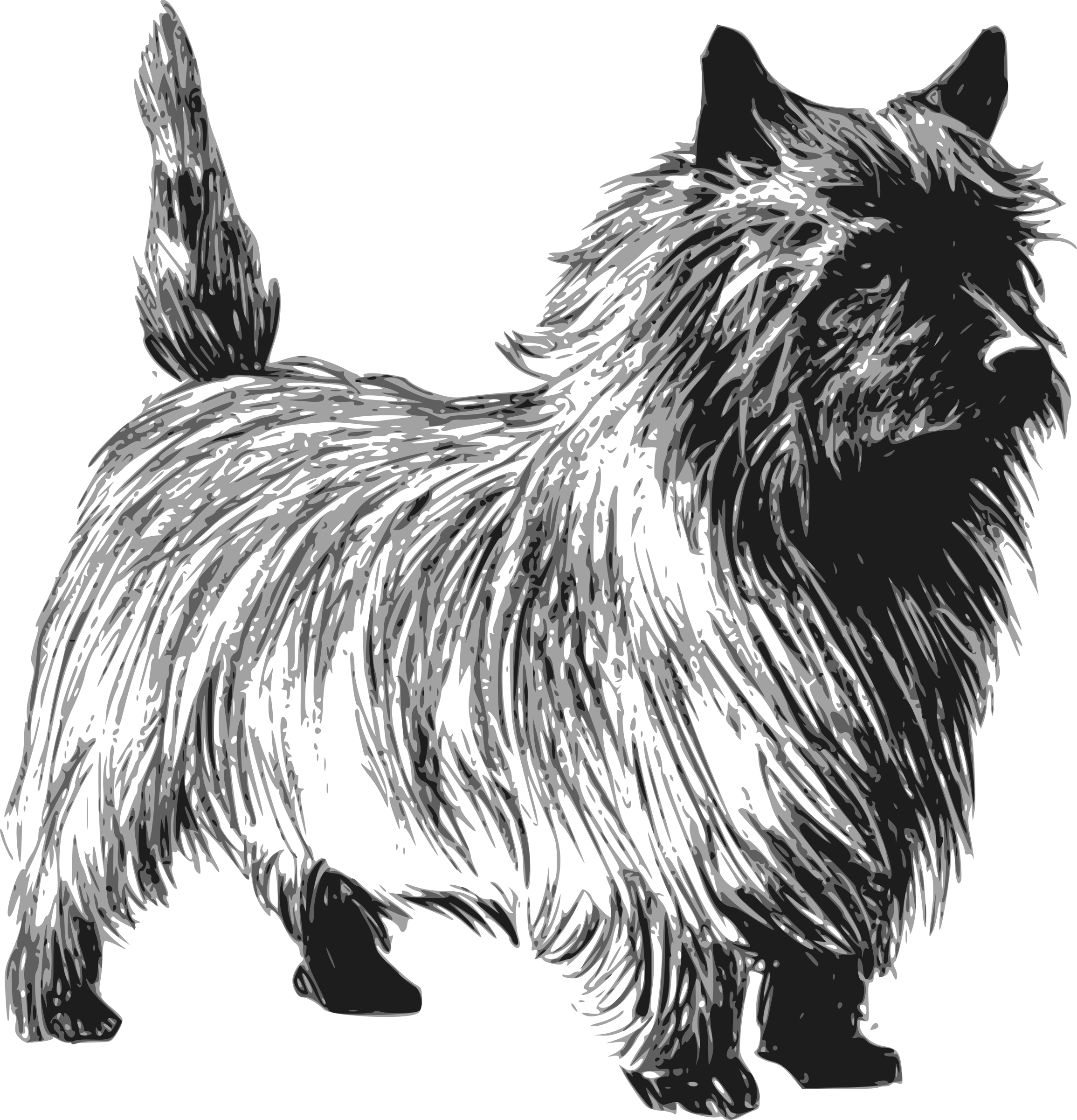 Hand clipart dog. Cairn terrier big image