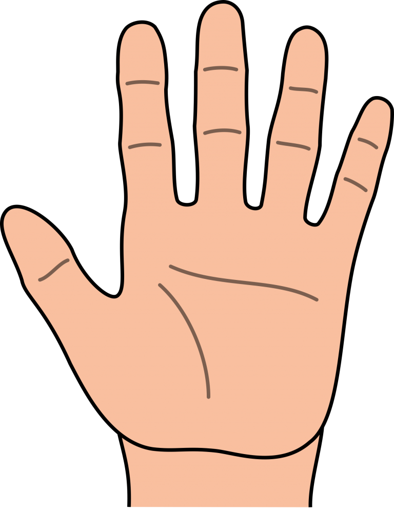 Outline hand showing palm. Handprint clipart child's