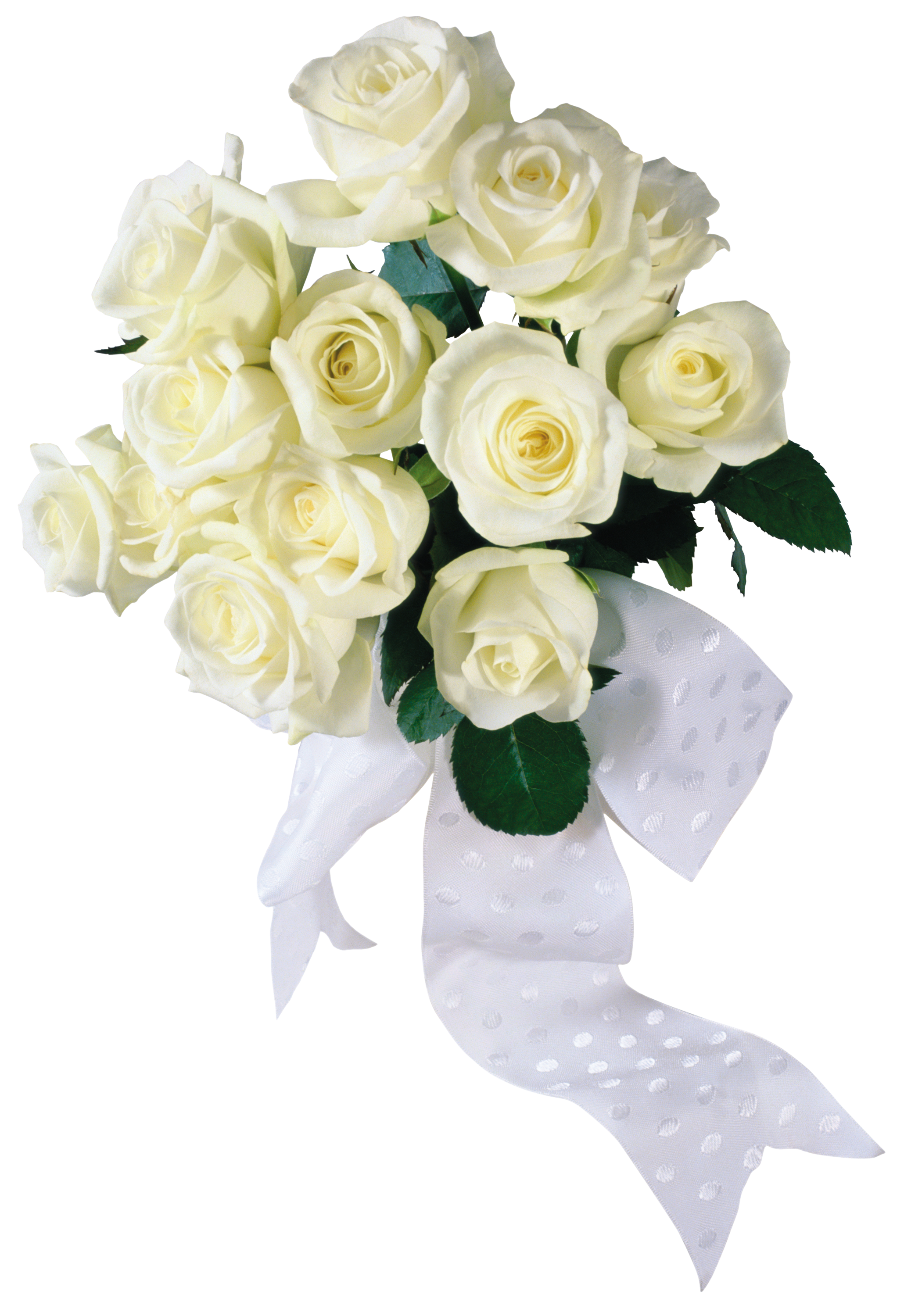 Hands clipart bouquet. White rose seventeen isolated