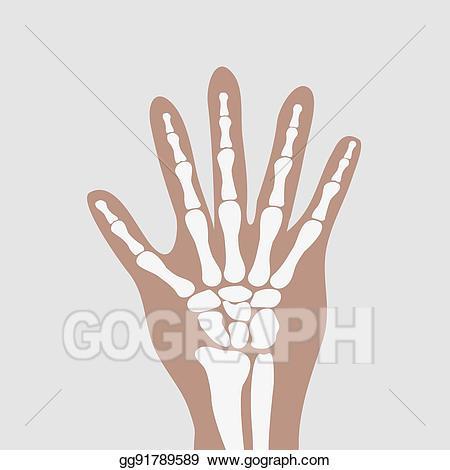 Vector art bones drawing. Hands clipart wrist