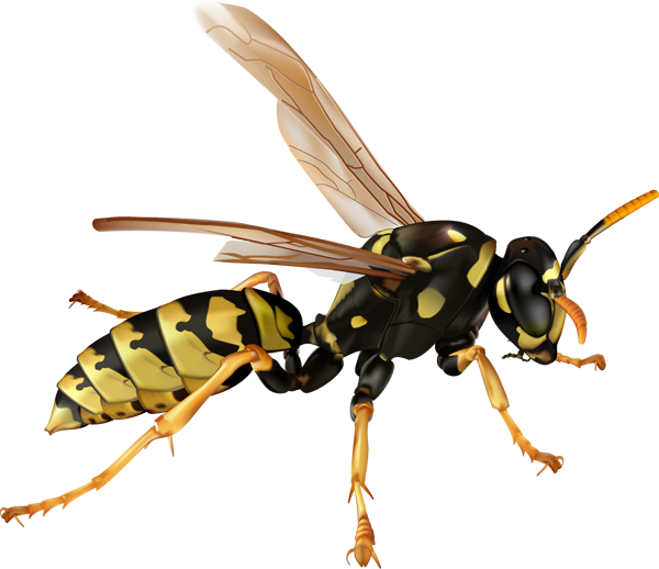 Wasp panda free images. Hornet clipart angry hornet