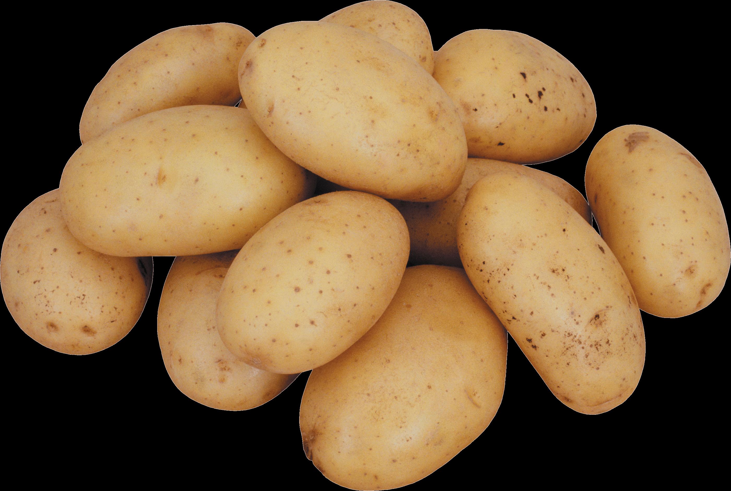 Hd png transparent images. Vegetables clipart potato