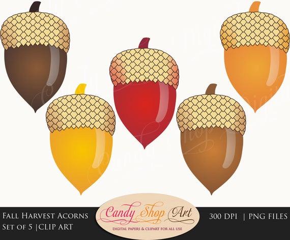 Harvest clipart acorn. Instant download fall acorns