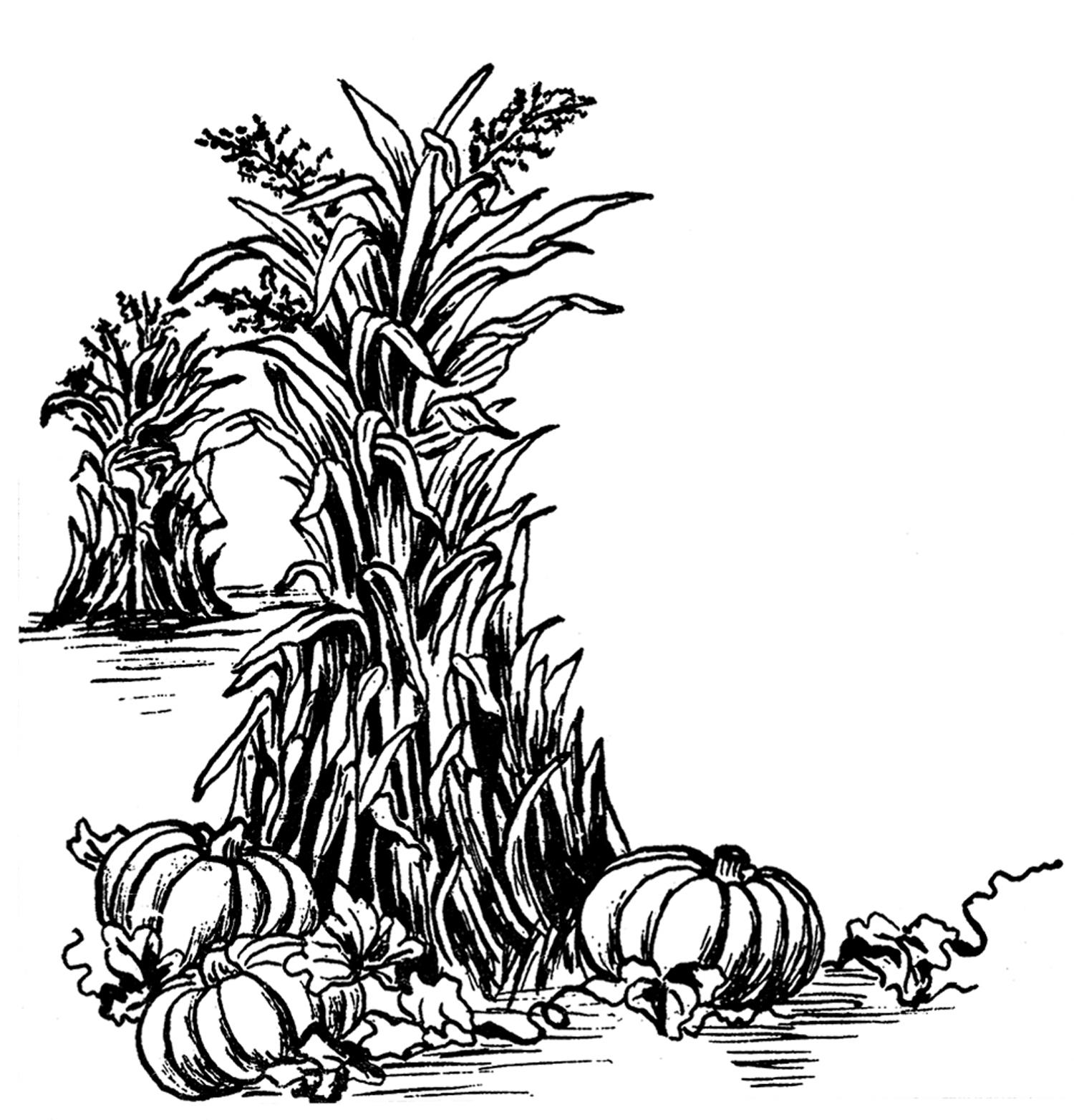 Harvest clipart autumn harvest. Fall clip art the