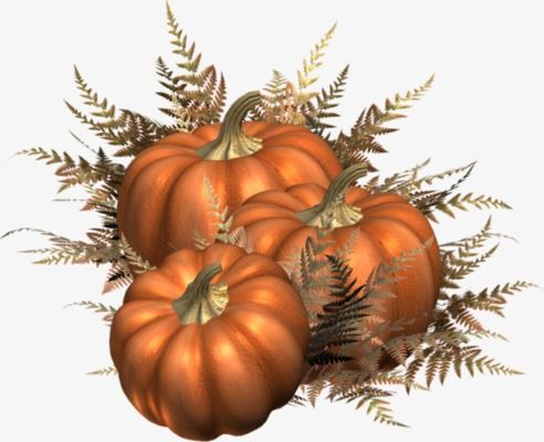 Harvest clipart decoration. Pumpkin rural country style